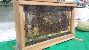 Live Bee Hive on display during our 2015 Cocke County Fair.